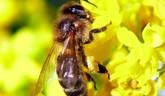 Projekt Včely v meste pokračuje