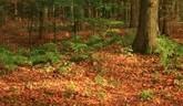 Kauza  o krádežiach dreva vo veľkom rozsahu