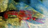 V Trenčianskych Tepliciach zaznamenali zvýšený výskyt raka