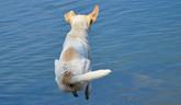 Ohrozuje nás kúpanie so psom?