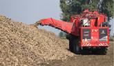 Problémy pestovateľov cukrovej repy