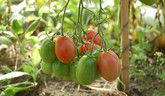 Pestovanie rastlín
