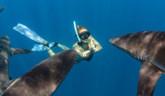 Francúzska Polynézia a Mexiko – ochrana žralokov