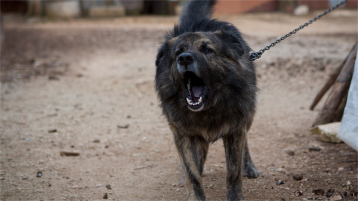 Держать собак на цепи могут запретить