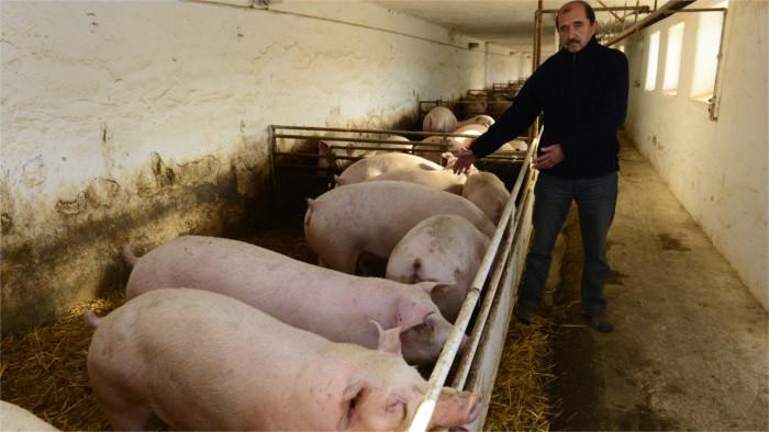 Agrarressort will gegen Schweinepest vorgehen
