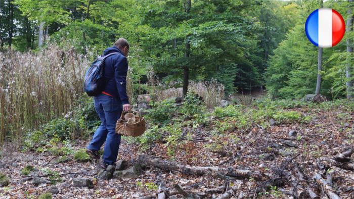 Plus de transparence dans l'exploitation des forêts