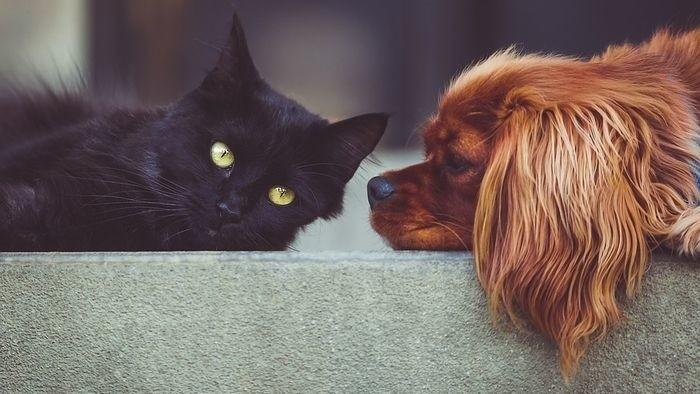 Najlepší priateľ psa II.