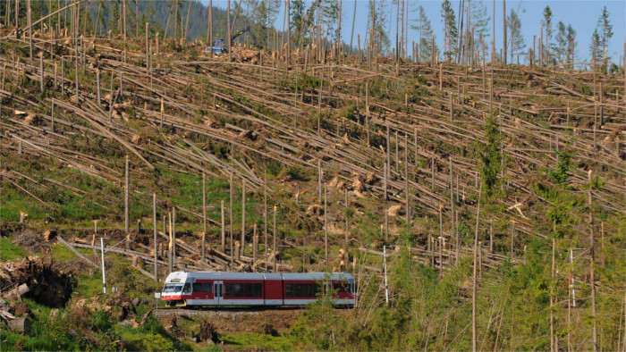 Лесные хозяйства  в Высоких Татрах начали высадку  300  тысяч новых деревьев