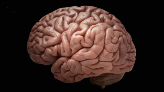 Záhady mozgu
