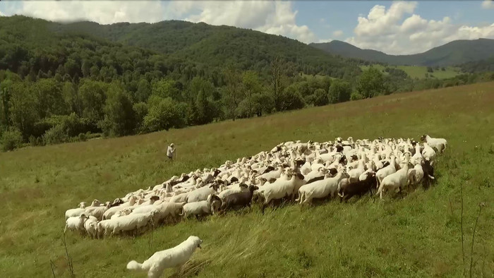 Pastierov deň