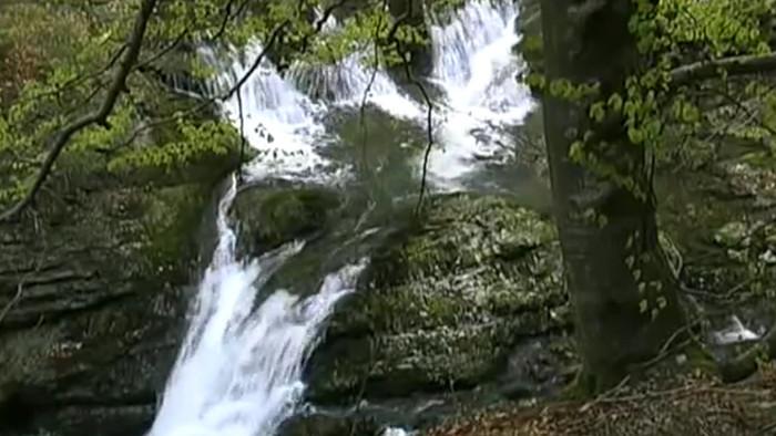 V pralesoch Karpát