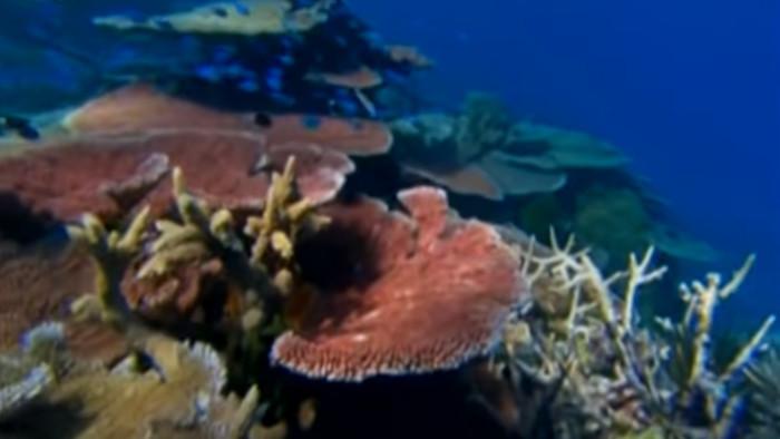 V koralových útesoch Červeného mora
