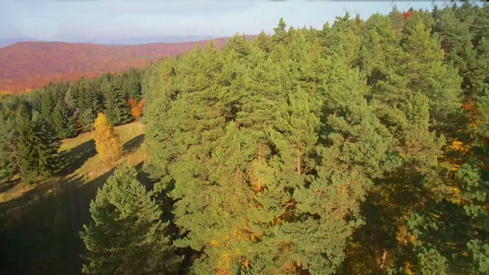 SOS z hôr, lesov a lúk