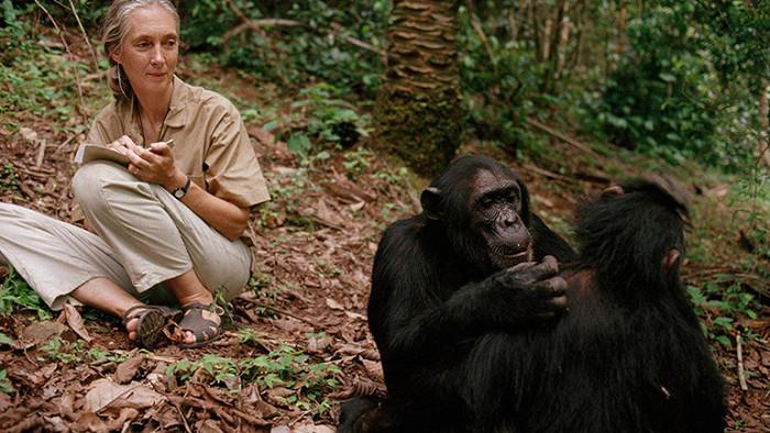 Jane Goodallová - život so šimpanzmi