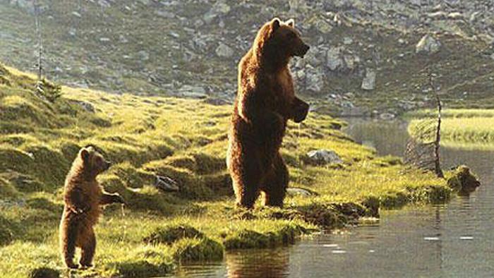 Medvedí les