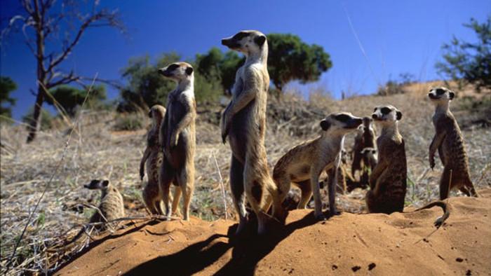 Kráľovstvo surikát: príbeh začína