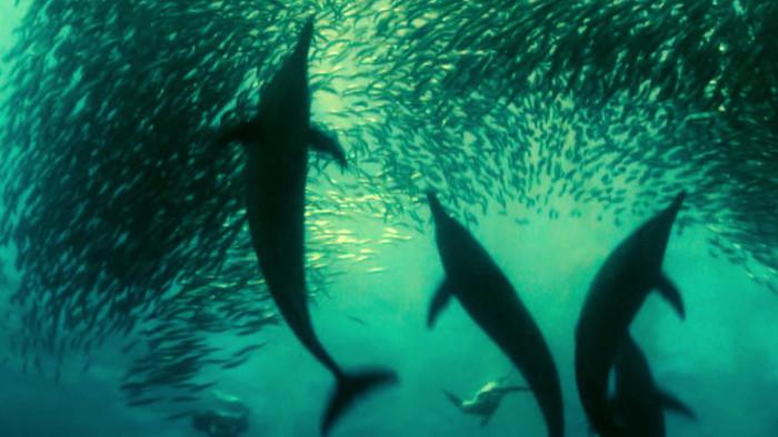Piruety morských gigantov