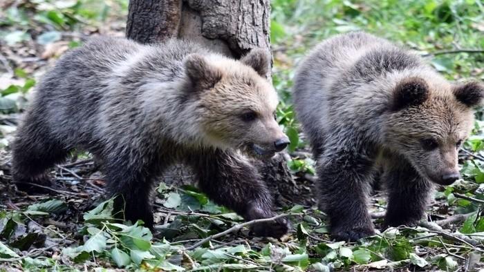В зоопарке в Кошице появились новые обитатели