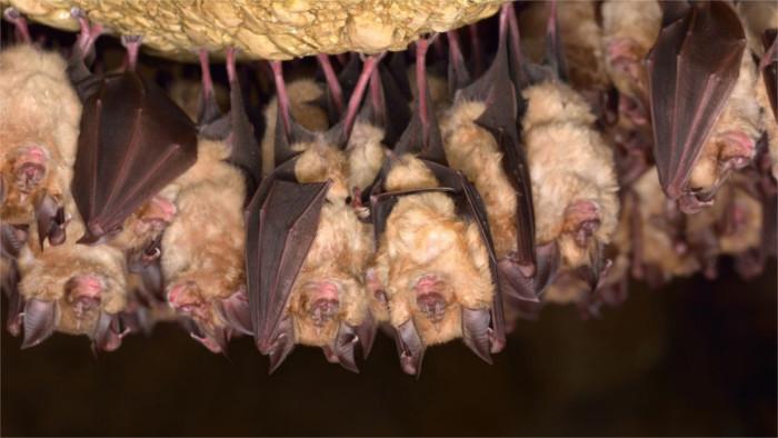 El recuento de los murciélagos en Slovenský Kras – Carst Eslovaco