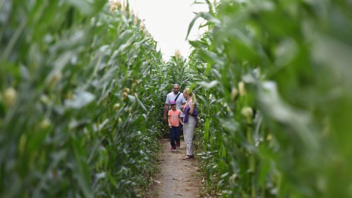 Visitamos el laberinto de maíz de Vlčkovce