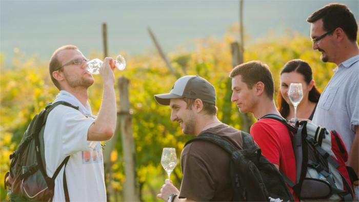 В Пезинке отменили традиционный фестиваль сбора винограда