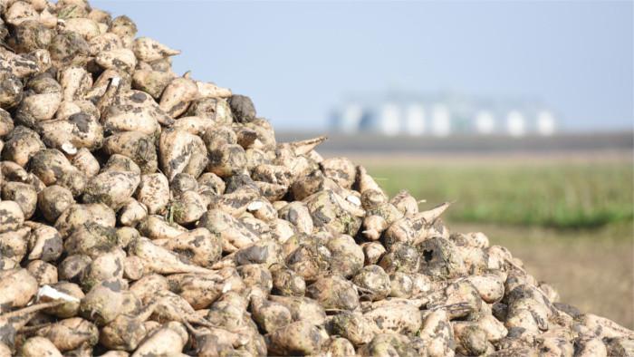 Poškodení pestovatelia cukrovej repy