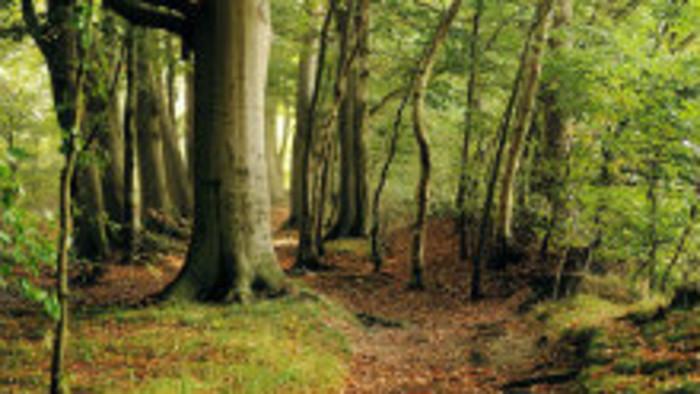 Karpatské bukové pralesy