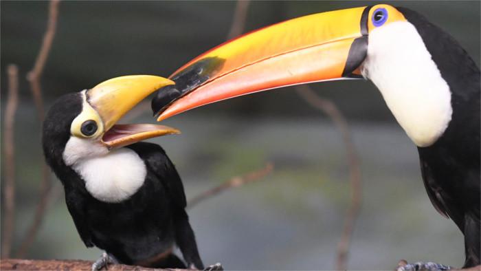 Košická zoo má európsku raritu