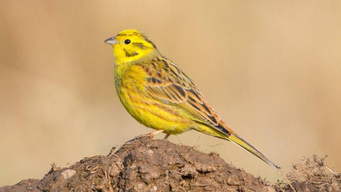 Nové druhy vtákov na Slovensku