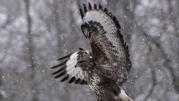 Подготовлено руководство по защите птиц на электролиниях