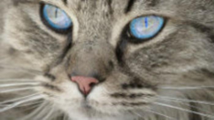 Môže sa človek nakaziť koronavírusom od mačky alebo od psa?