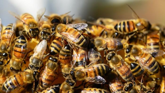 789 - Včelín