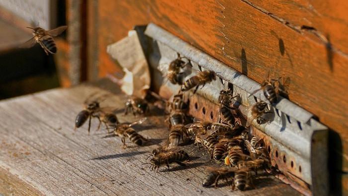 Prichádza čas rojenia včiel