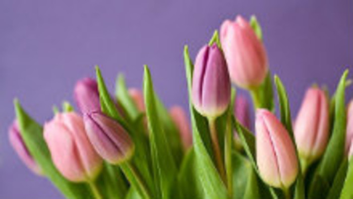 Kvety pestované vo férových podmienkach