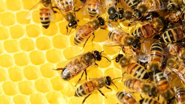 Z výstavy o včelárstve v Nitre