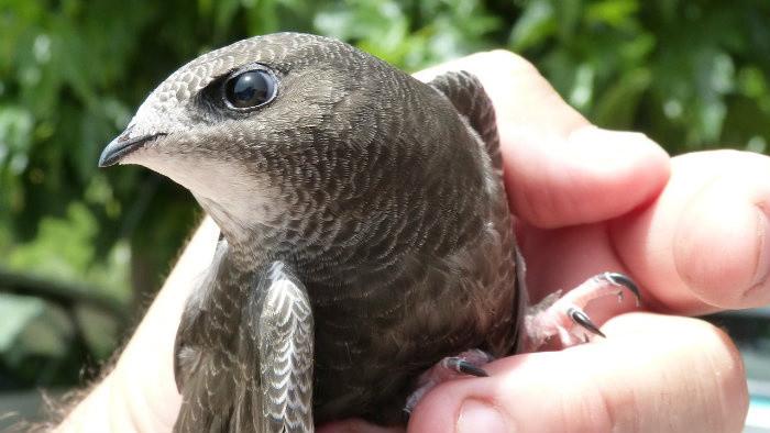 Príbeh ornitológa
