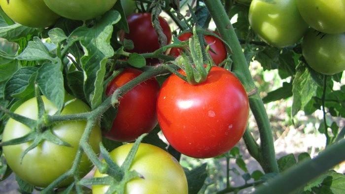 Talianská paradajková omáčka SUGO