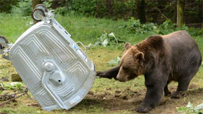 Bears stir worries in northern Slovakia