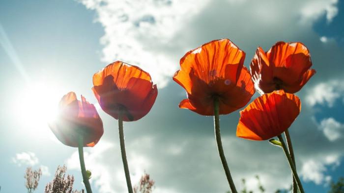 Červený mak – pamiatka na veteránov