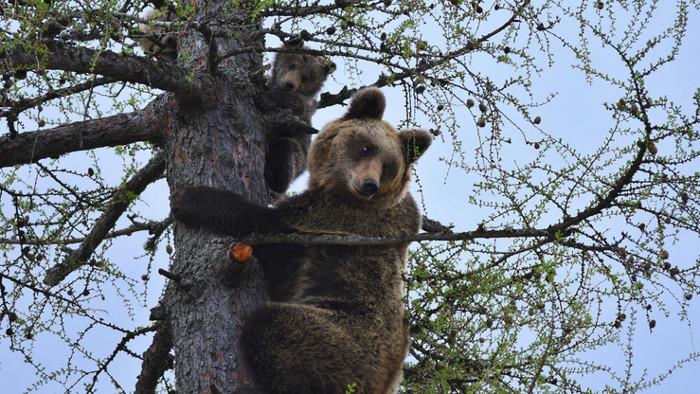 Hohe Tatra: Einhaltung von Regeln im Umgang mit Bären