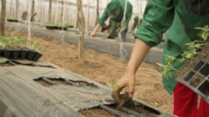 V agrosektore chýbajú pracovné sily