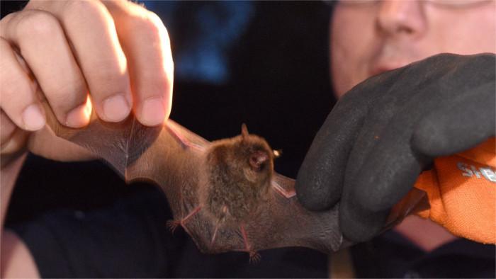 В Ракоше торжественно открылась Аллея летучих мышей
