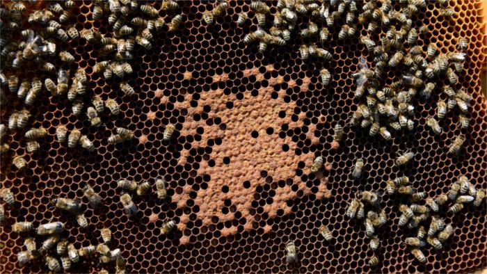 Гигантcкий пчелиный улей, подаренный президенту З.Чапутовой Словенией, отправился в Прешов