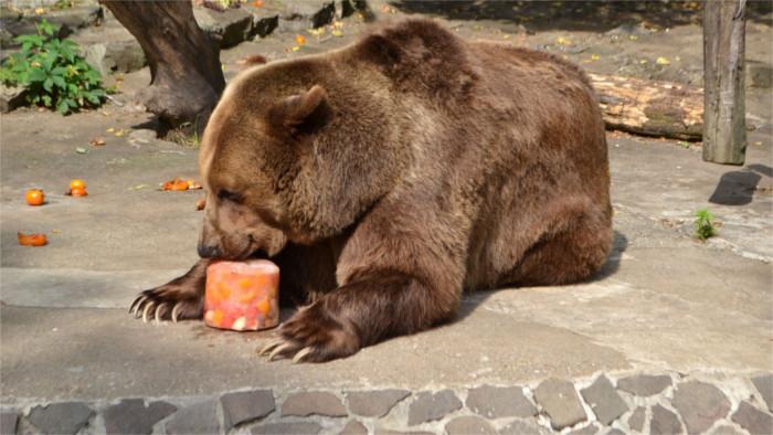 Словацкие медведи эмигрировали в Англию. Легально