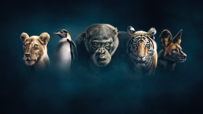 Vstúpte s RTVS do sveta drámy a zrady, aký vie stvoriť len príroda