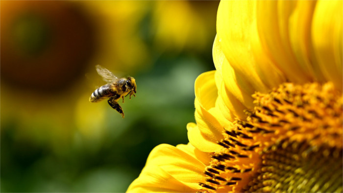 «Пчёлка» поможет с передвижением в Смоляницах