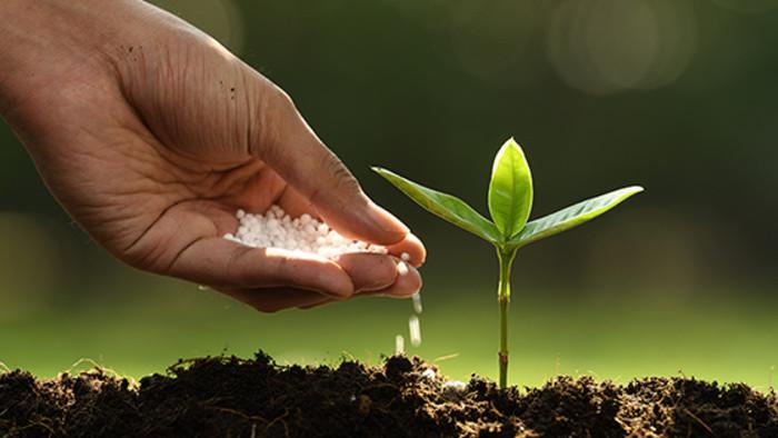 Výskum hnojív pri hydroponickom pestovaní rastlín