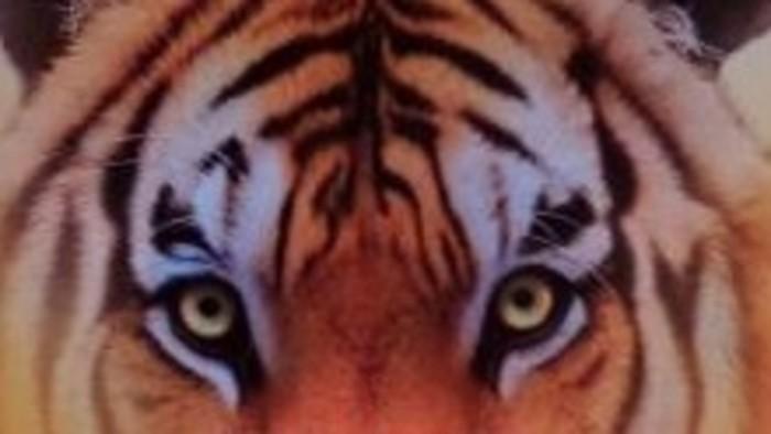 Filmová knižnica: Plavba s tigrom