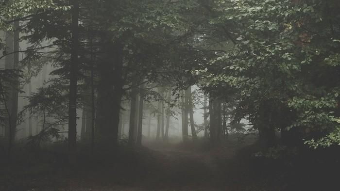 O zvukoch lesa s Jonášom Gruskom