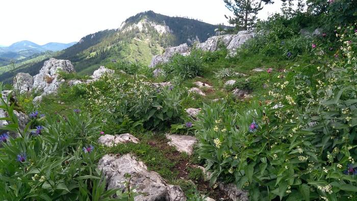 Čerenová skala v Chočských vrchoch